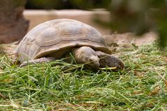 A turtle on grass Stock Images