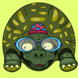Turtle. Gree turtle with blue glasses and pink hat Stock Photography