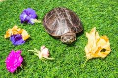 Turtle on green grass texture background eco concept, asia, thai Royalty Free Stock Photo