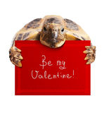 Turtle with Greeting Card Royalty Free Stock Photography