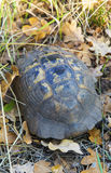 Turtle on the ground. In forest Stock Photo