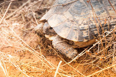 Turtle on the ground Stock Photography