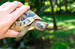 Turtle in hand Royalty Free Stock Images