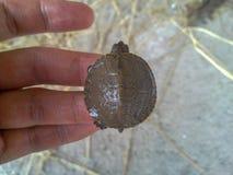A turtle on hand, Iran, Gilan, Rasht stock image