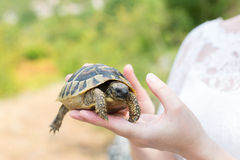 Turtle in hand - on palm Royalty Free Stock Image