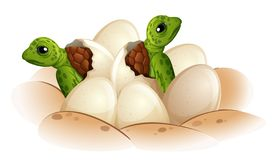 Free Turtle Hatching The Egg Royalty Free Stock Photo - 128478055