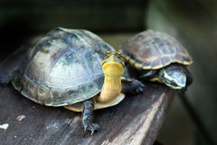 Turtle hide world on wet wood Stock Images