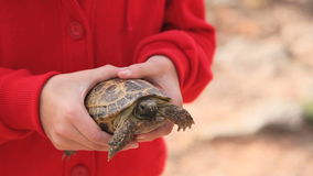 Turtle Hold. A sweet little turtle being held stock video