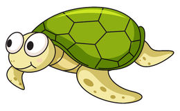 Turtle. Illustration of an isolated turtle Royalty Free Stock Photos