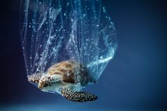 Free Turtle In Plastic Bag In Ocean. Platic Pollution Problem. World Oceans Day Concept. Environment Concept. Stock Photo - 184299790