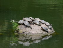 Turtle island. Rock in a japanese garden with water turtles resting in the sun stock photography