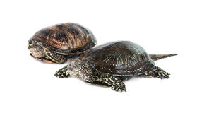 Turtle isolated Stock Photos
