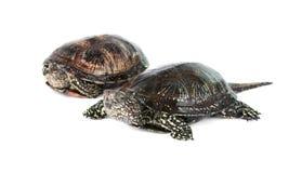 Turtle isolated Stock Photos
