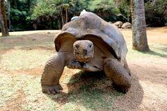 Turtle journey stock photography