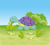 Turtle in the jungle Royalty Free Stock Photography