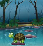 A turtle at the lake Royalty Free Stock Photography