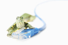 Turtle on LAN cable Stock Images