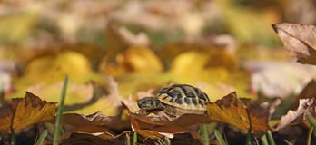Turtle on leaves Stock Photos
