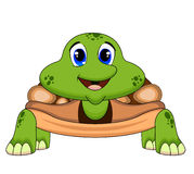 Turtle with light brown colour Royalty Free Stock Photography