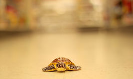 The Turtle. Lonely toy turtle on floor of department store Stock Photography