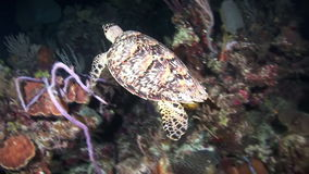 Turtle looking for food at night on the reef stock footage