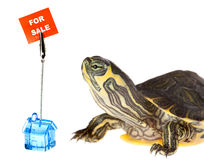Turtle looking for a house Royalty Free Stock Photos