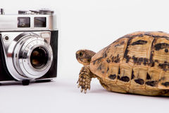 Turtle looking at an old camera Royalty Free Stock Photography