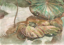 Turtle and lotus leaves watercolor painting. Turtle and lotus leaves hand painted watercolor Stock Photo