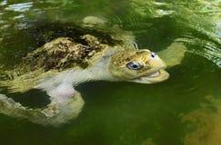 Turtle Stock Photos