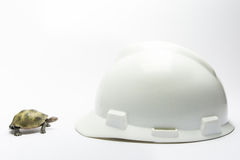 Turtle meet helmet Stock Images