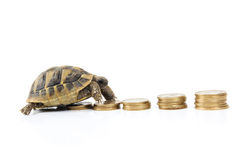 Turtle with money. Turtle makes its way across a money background Royalty Free Stock Photo