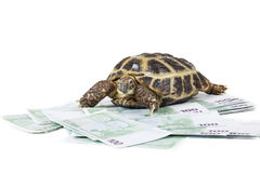 Turtle on the money Stock Image