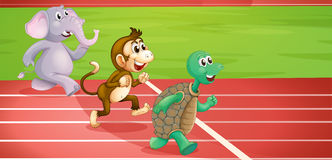 A turtle, a monkey and an elephant running Stock Photos