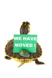 Turtle on the move Stock Images