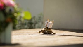 A turtle moving forward regardless obstacles to the better place stock footage
