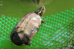 Turtle. The Turtle in national park stock photography
