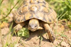 Turtle in nature royalty free stock images
