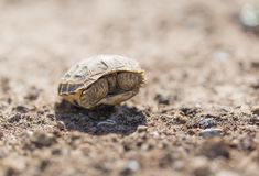 Turtle in nature. In the park in nature Royalty Free Stock Image