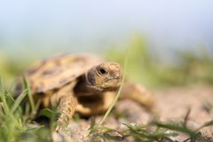 Turtle in nature. In the park in nature Stock Photography