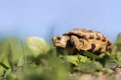 Turtle in nature. In the park in nature Stock Images