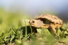 Turtle in nature. In the park in nature Stock Photo