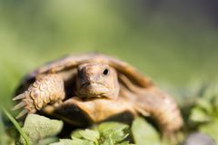 Turtle in nature. In the park in nature Stock Photos
