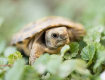 Turtle in nature. In the park in nature Royalty Free Stock Photos