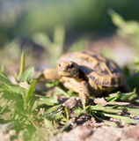 Turtle in nature. Photo of wildlife in the park Royalty Free Stock Photos