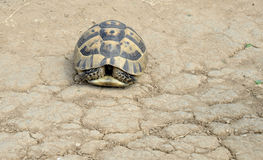 Turtle in nature on Sinemorec Bulgaria august 2016 Stock Photography