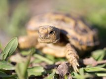 Turtle in nature. In the park in nature Royalty Free Stock Photo