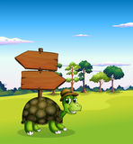A turtle near the empty wooden arrow signboards Royalty Free Stock Photo