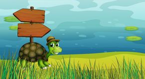 A turtle near the wooden arrow boards Royalty Free Stock Image