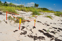 Turtle Nest Royalty Free Stock Images