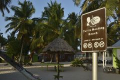 Turtle nesting beach in Belize. Tobacco Caye, Belize - May 21, 2017: Turtle Nesting Beach on Tobacco Caye in Belize stock images